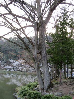 016臥龍公園