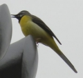022野鳥