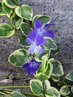 019紫の花