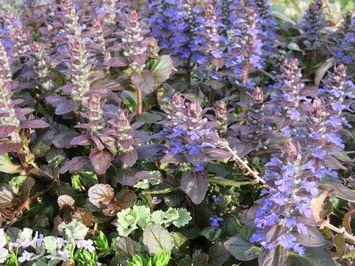 005紫色花