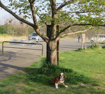 002緑地公園