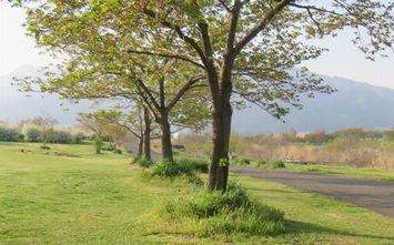 010緑地公園