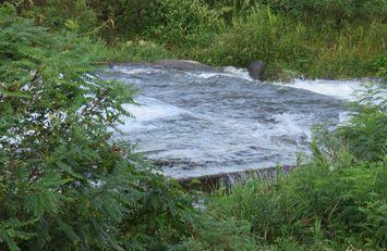 川の公園3