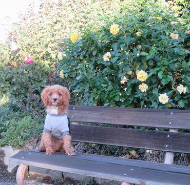 IMG_3714バラ公園