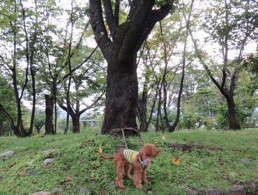 IMG_3795バラ公園2