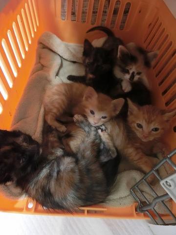 子猫来襲2016・5月13日 003