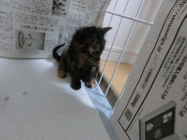 子猫来襲2016・5月13日 009