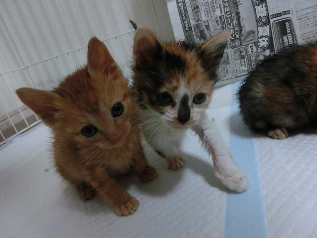 子猫来襲2016・5月13日 014
