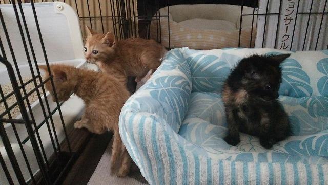 子猫来襲2016・5月13日 016