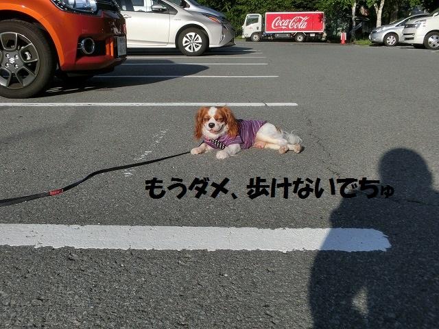 ワンコと行く夏の信州2016 026