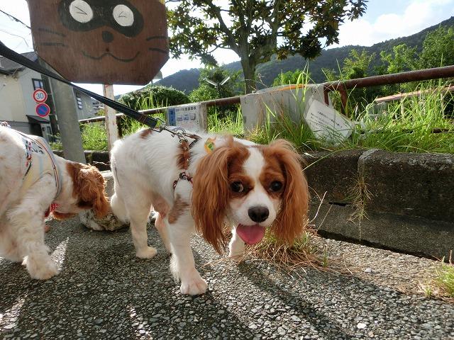 夏の終わりの散歩 018