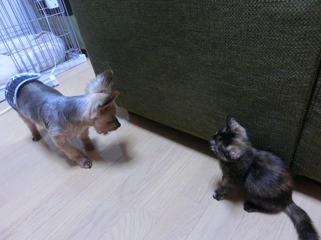 木本家集合と子猫来襲 032