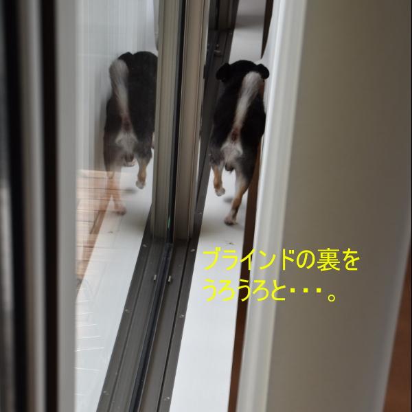 160925_1_3.jpg