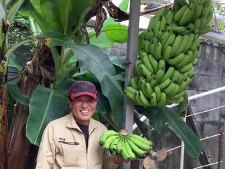 img_3efd6c0e29バナナが大豊作
