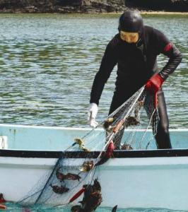 Cqpqx7jUAAA6C一人追い込み漁50年