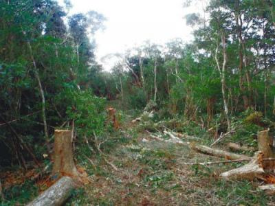 Csa472RVYAIEz国有林伐採、新ルートか