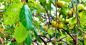 沖縄に秋の訪れ