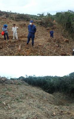 Cs-無残なまでの森の破壊