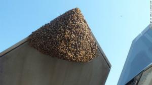 f-22-bees-nozzle-exlarge-169.jpg