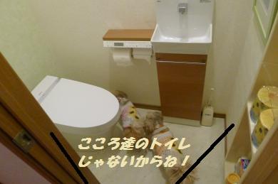 cy2303.jpg