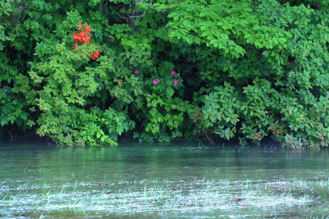 グダリ沼4