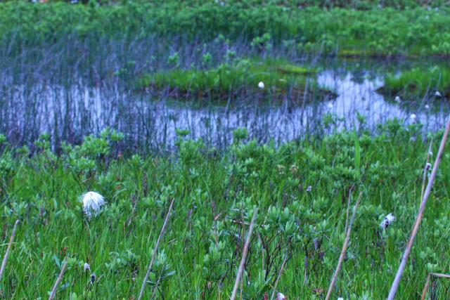 田代湿原2