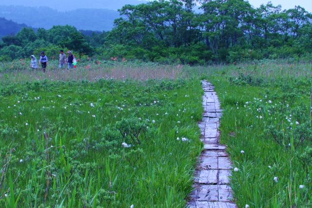 田代湿原7