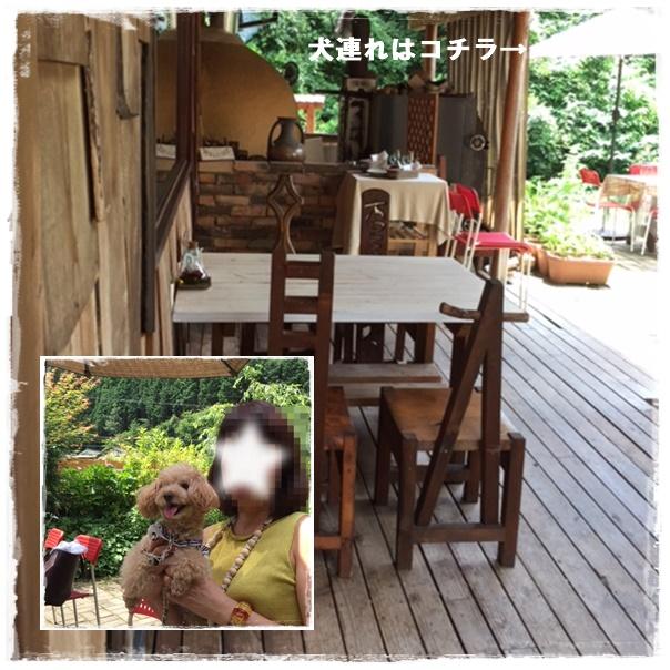 4107cats_20160726170617077.jpg