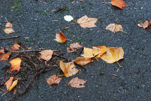 黄葉した葉