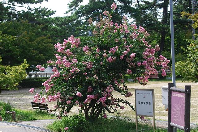 ピンクのサルスべりの花
