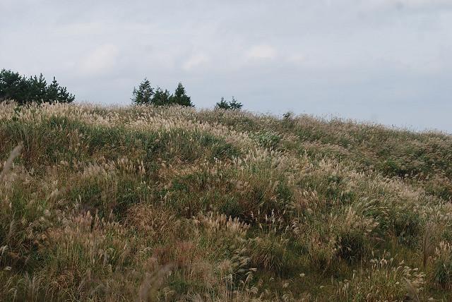 ススキの野原がきれい