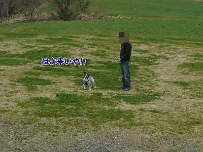 蒜山ドッグラン (3)