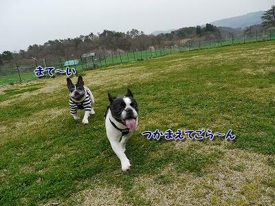 蒜山ドッグラン (8)
