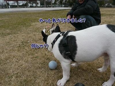 みさき公園 (7)