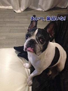 テレビ (1)