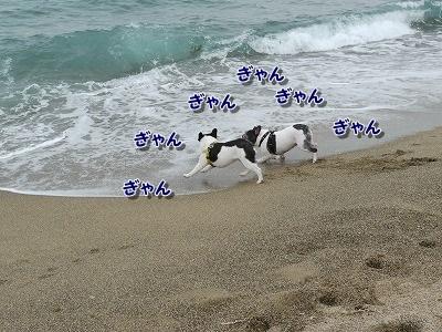 白兎海岸 (5)