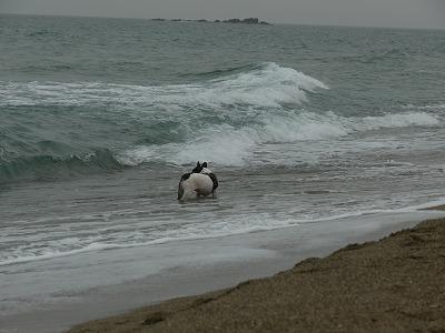 白兎海岸 2(3)