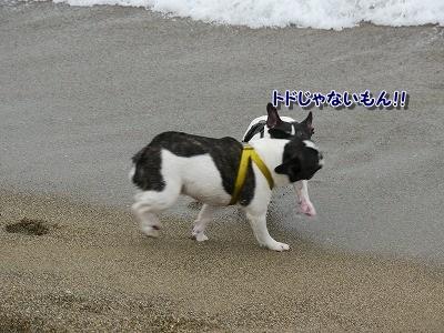 白兎海岸 2(6)
