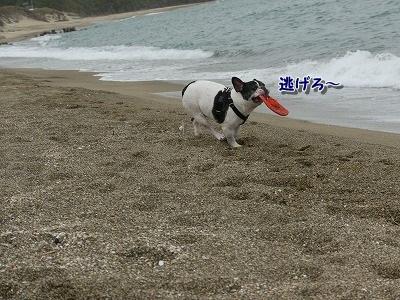 白兎海岸3 (3)