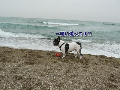 白兎海岸3 (5)