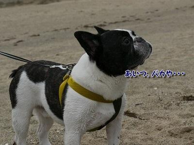 白兎海岸5 (4)