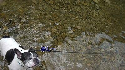 川遊び (5)