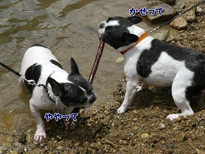 ひっぱりっこ (3)