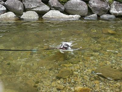 泳ぐ (2)