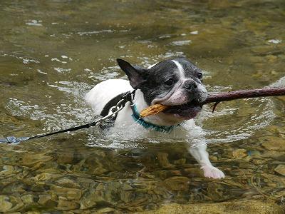 泳ぐ (4)