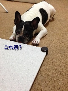 いらない (1)