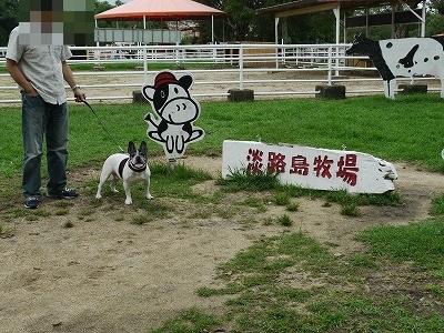 牧場 (1)