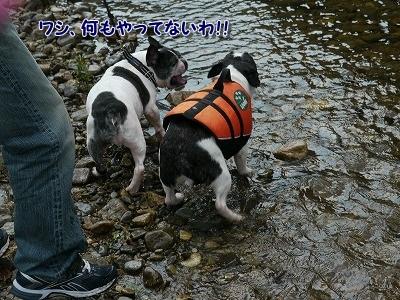 川遊び (7)