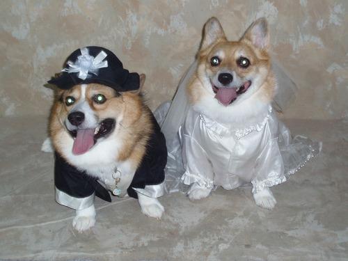 7歳で結婚式!?