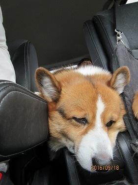 長旅疲れ?